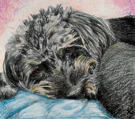 Buddy pet dog portrait by JuliaArts Rotherham South Yorkshire